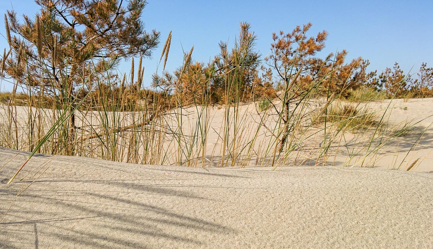 берег-дюны